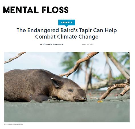 Mental Floss Tapirs wildlife journalist