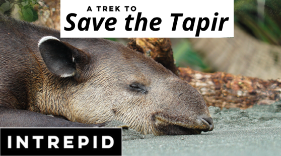 A Trek to Save the Tapirs _ Wildlife Journalist